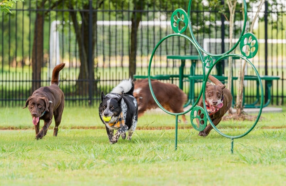 Give your furry friend more than just a dog park at Wildcat Ranch