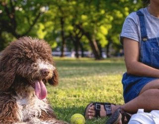Wildcat Dog with owner at dog park