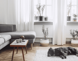 Decorated living room with indoor plants